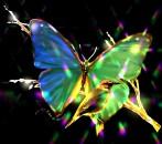 borboletas coloridas 4