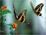 borboletas coloridas 5