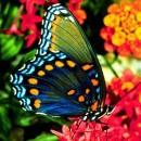 borboletas coloridas 8
