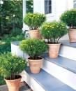jardim com vasos 5