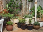 jardim com vasos 7