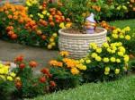 plantas para jardim 3