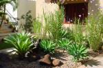 plantas para jardim 4