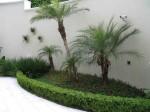 plantas para jardim 5