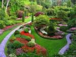plantas para jardim 6