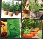 ervas medicinais 2