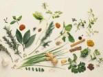 ervas medicinais 3