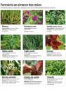 ervas medicinais 4