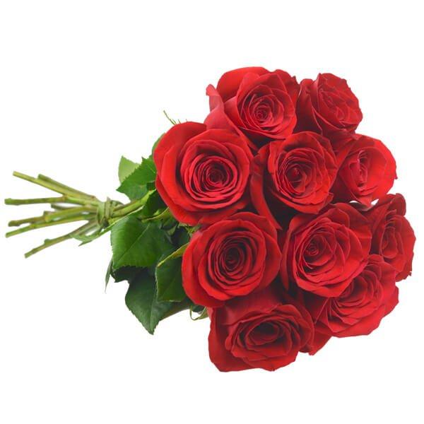 rosas vermelhas colombianas